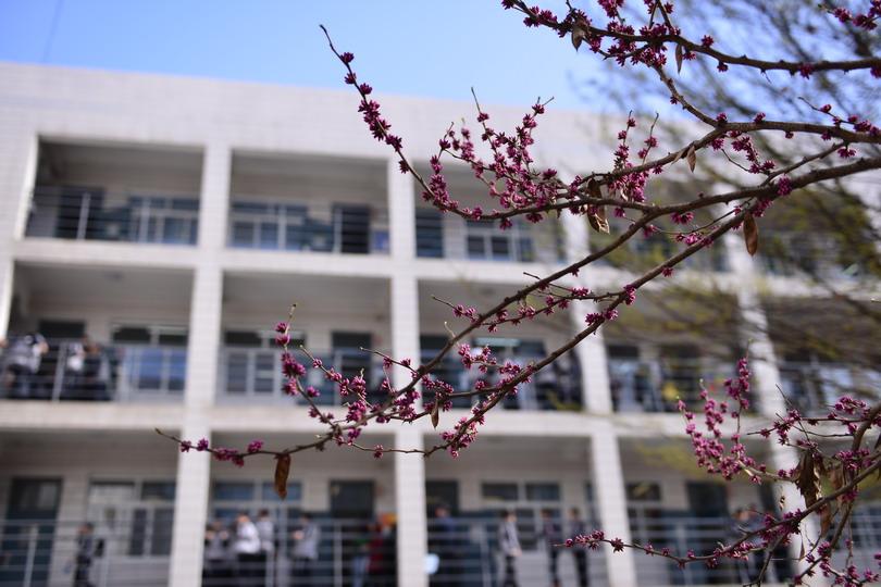 鲜花盛开的校园